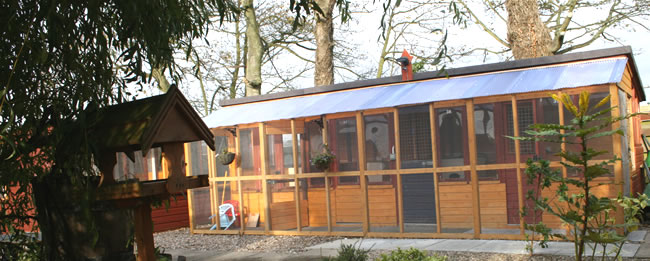 Creature Comforts Cattery Chalet